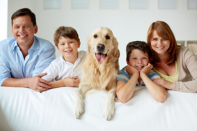 family-dog-living-room-indoors-24985341_xl.png